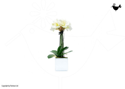 PRODUCTS_FLORITURE_7